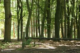 Perfecte omgeving voor wandelen, fietsen en mountainbiken...