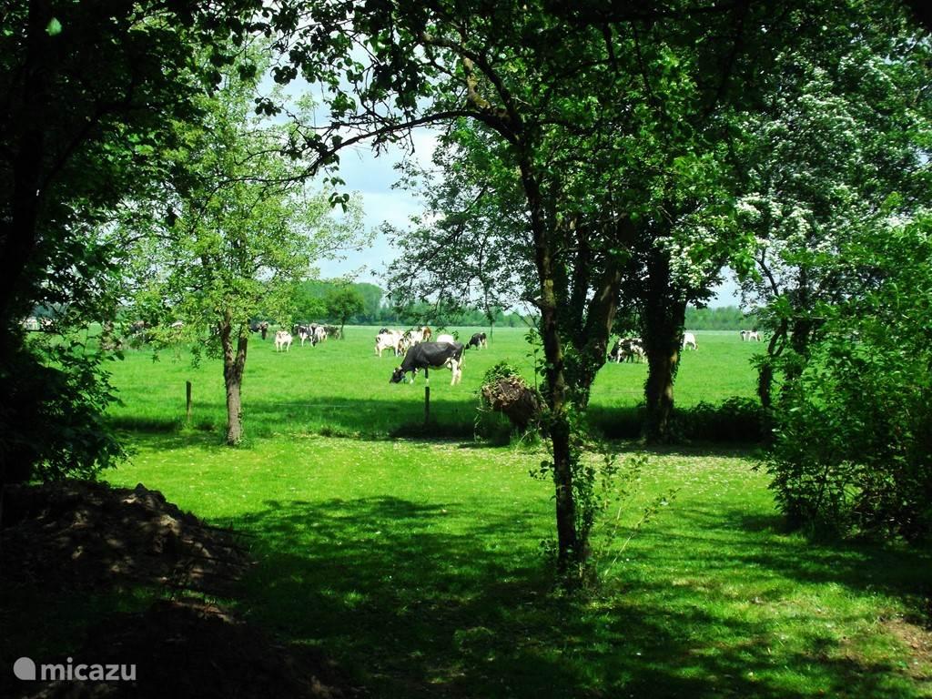 Vanaf het overdekte terras uitzicht op de tuin en het weiland.