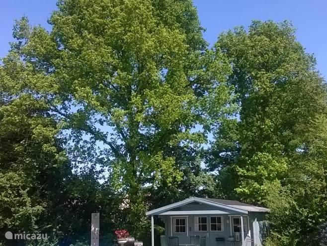 voorjaar 2015; u bent omringd door prachtige oude bomen