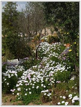 Éen van de tuinen Eén en al bloemenpracht.
