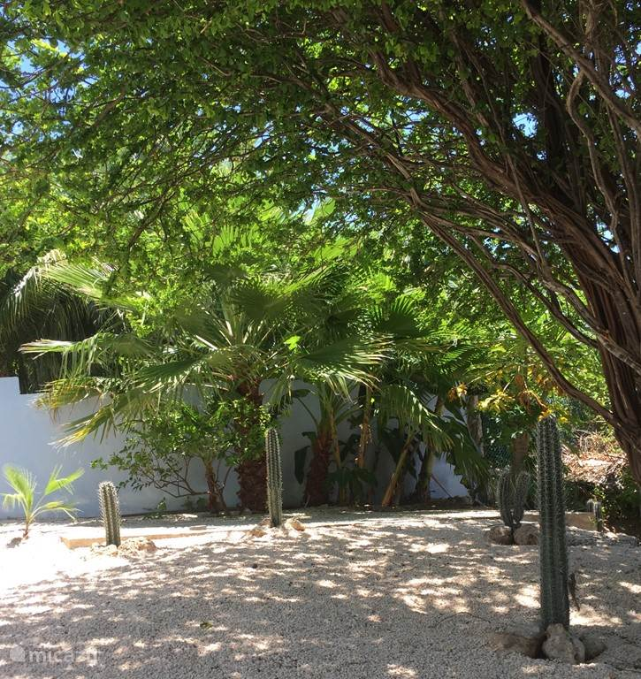 Garden with beautiful trees and plants and beautiful typical Curacao cacti.