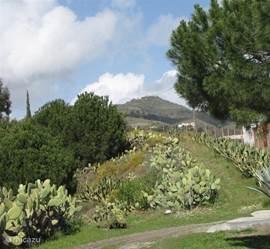 Casita Balcón de Andaluz staat op een landgoed van 6000m2 met verschillende fruitbomen, waar u afhankelijk van het seizoen de vruchten kunt plukken voor eigen gebruik.