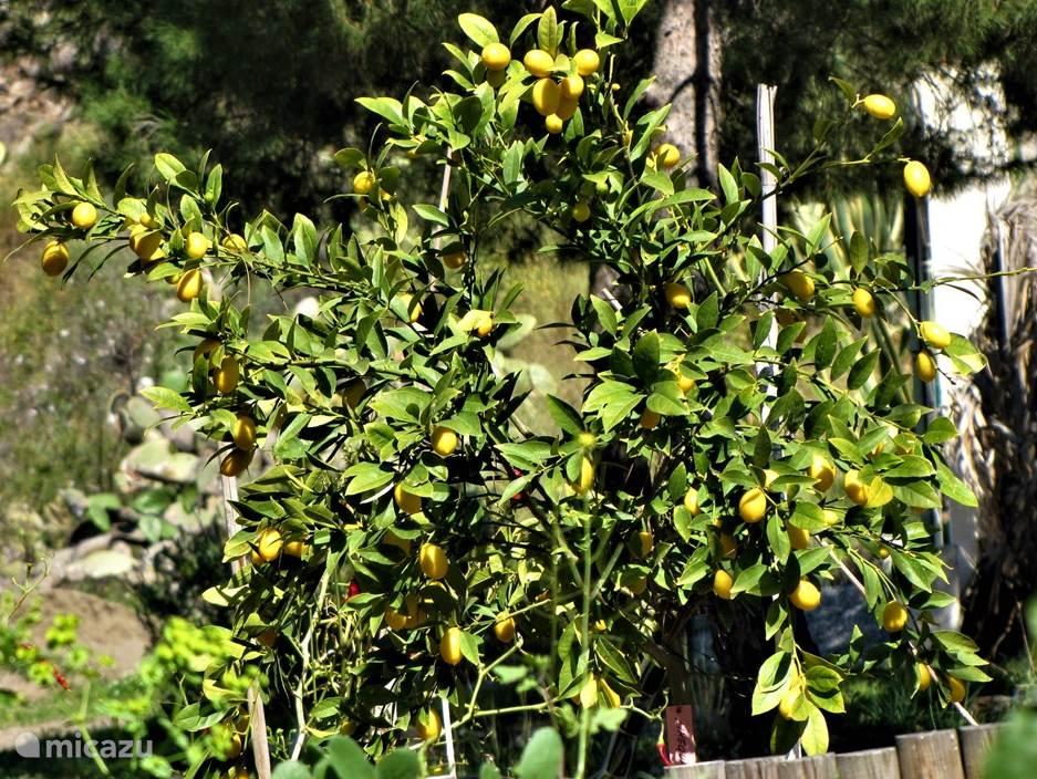 Pluk fruit en groenten van het seizoen
