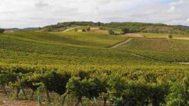 AOC Gaillac, a view of the vineyards in the Tuscany of France