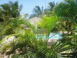 Pool and palapa in green