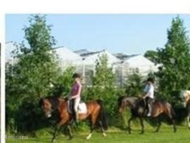 U kunt in de nabije omgeving paardrijden. De beheerster heeft een eigen manege. Laat de kids eens een les nemen.