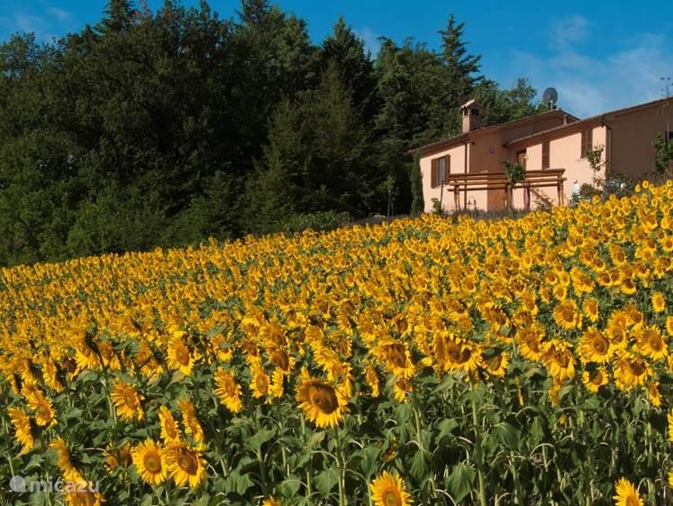 Vakantiehuis Italië, Marche, Urbino appartement Ca'Beto appartement Raffaello