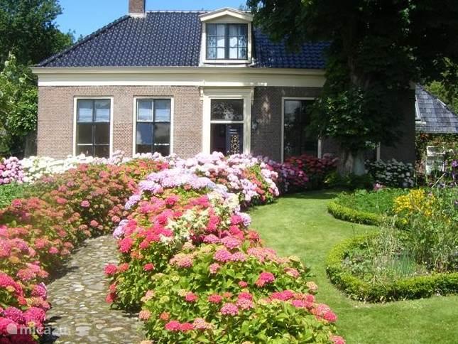 Vooraanzicht van de woonboerderij. Het voorhuis aan de terp en wandelpad met alle hortensia,s in bloei.
