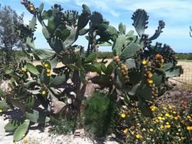 Onderweg een bloeiende cactus!