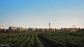 De directe omgeving omvat granaat-appel-boomgaarden/citrus-vrucht-boomgaarden en ,zoals hier ,artisjokken-velden