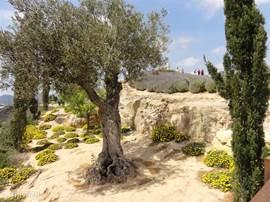Eeuwen-oude olijfbomen met prachtig gekleurde vetplanten sieren de omgeving