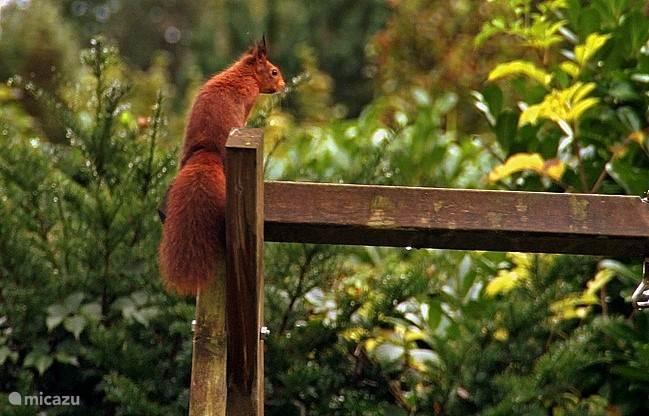Dit eekhoorntje komt elke dag op voedsel af