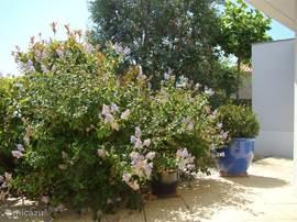 Genieten op het terras van de mooi ingerichte tuin.
