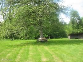 Boombank om de 80 jarige kers op de omliggende halve hectare eigen grond en vers gemaaid gras