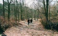 De Donkere Duinen worden gekenmerkt door bosgebied; dennen en loofbos