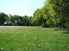 Een bloemenweide op een heuvelrug, onderdeel van het Oldenzaalse stuwwallencomplex