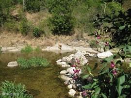 Wandelen met de hond bij riviertje Le Doux waar het huis aan grenst. pootje baden;dammen bouwen.