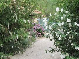 Bloemen terrein