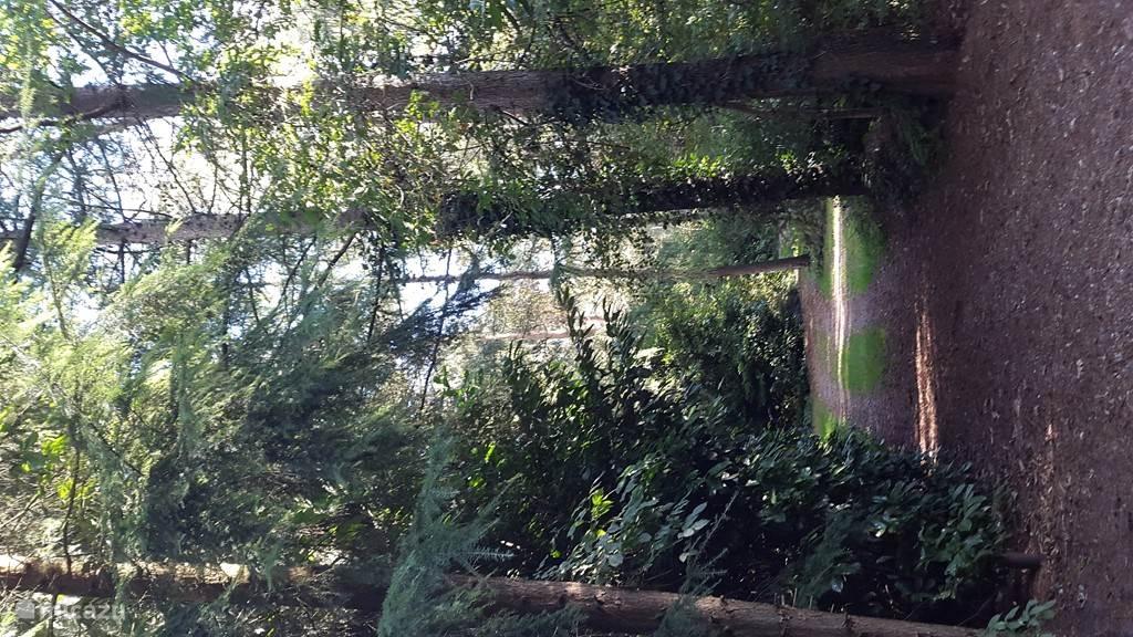 Vanuit de bungalow het bos in