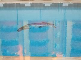 Foto van het grote zwembad - Mooi overloop bad dus geen hoge opstaande randen