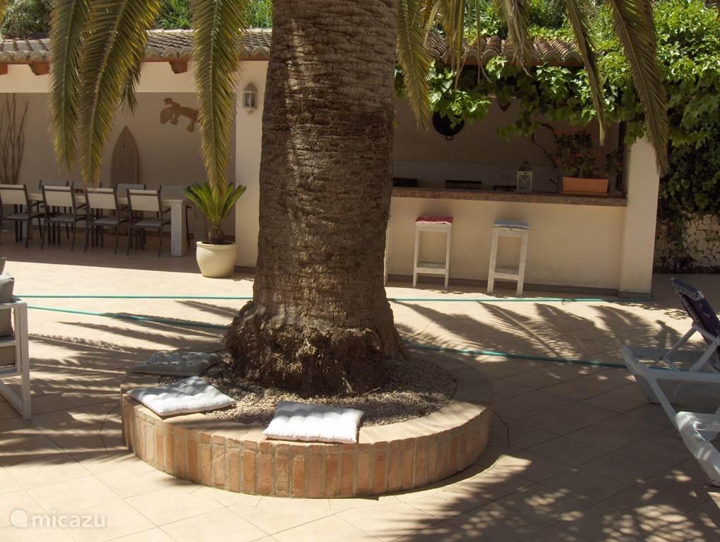 Heerlijk plekje onder de giga palm