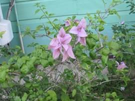 Mooie bloemen in de tuin.
