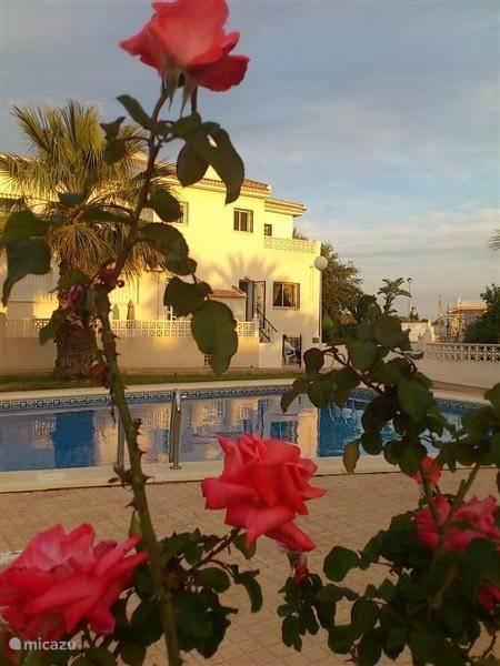 Vacation rental Spain, Costa Blanca, Benijófar terraced house My dream house