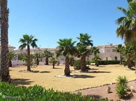 De palmentuin naast het zwembad