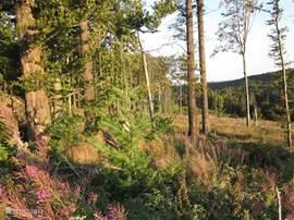 Vele landschappen: weilanden, bossen, open vlaktes, heidegebieden, bergen, dalen en meertjes. Heel bijzonder om die variaties in 1 route te zien.