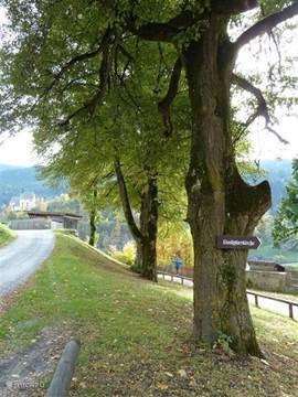 Om het slot heen lopen is de moeite waard, prachtige bomen en vergezichten zijn de beloning.