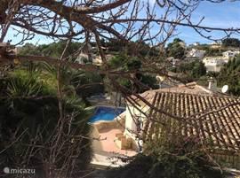 In het bovendste gedeelte van de tuin groeien citrusvruchten, druiven, abrikozen, een olijfboom en vele andere soorten.