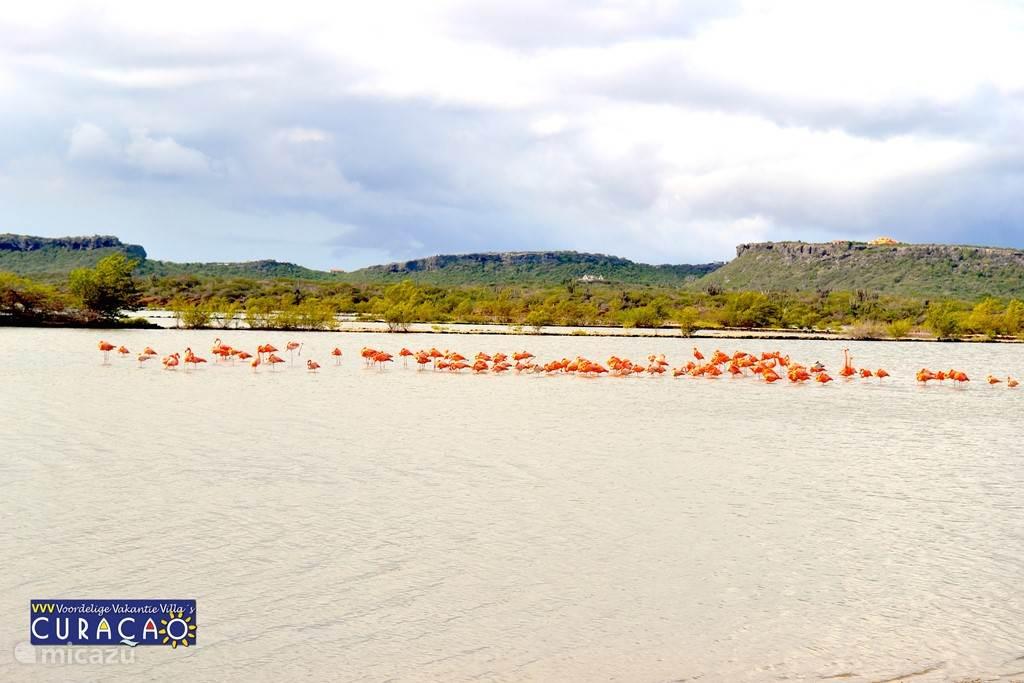 Vanaf de hoge punten op Coral Estate kijkt op een binnenzee, de voormalige   zoutpannen van Jan Kok, met flamingo's.