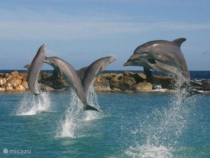 You can take them to the coast, but a visit to the Seaquarium you can not afford to miss. You can swim with dolphins, but also consider the numerous aquariums and animals.