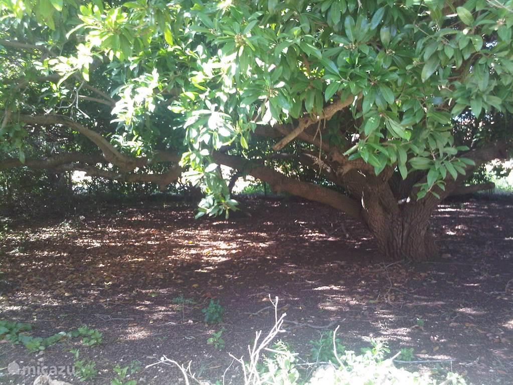 Naast de accommodaties is een grote tuin met prachtige mispelbomen. Hier kan je heerlijk een hangmat hangen. Laat je in slaap wiegen door de wind. Geniet van het geluid van de vele tropische vogels.