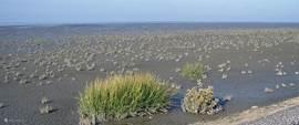 Het wadden, een van de grootste  natuurgebieden van Europa.