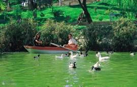 Romantisch samen in een roeibootje of gezellig samen met de familie naar het domein 'Degirmen' (10min van de villa per fiets of dolmus).