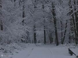 Directe omgeving in winterse sferen