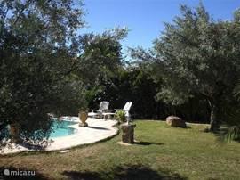 De tuin met het zwembad.