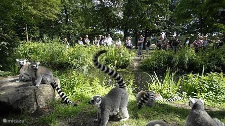 Noorder Dierenpark