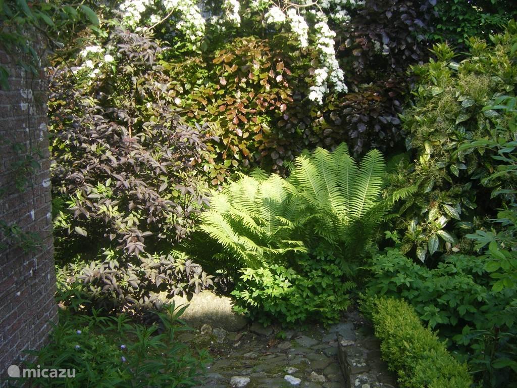 Prachtige kleuren in de oost tuin