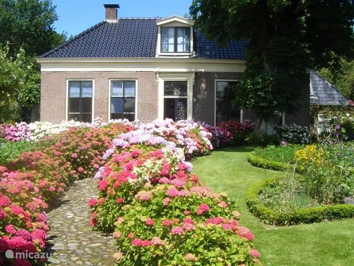 Alle hortensia,s in bloei. Vanaf het wandelpad op de terp is dit de opgang van de woonboerderij.