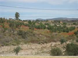Het zicht aan de achterkant van de villa - olijfboomgaarden.