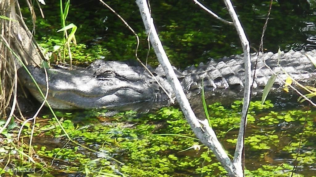 De Everglades op een paar uur afstand