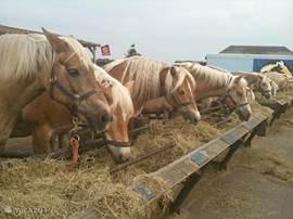 Paarden.