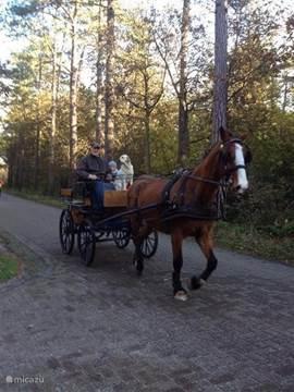 Paard rijden is ook mogelijk op een van de nabij gelegen maneges.