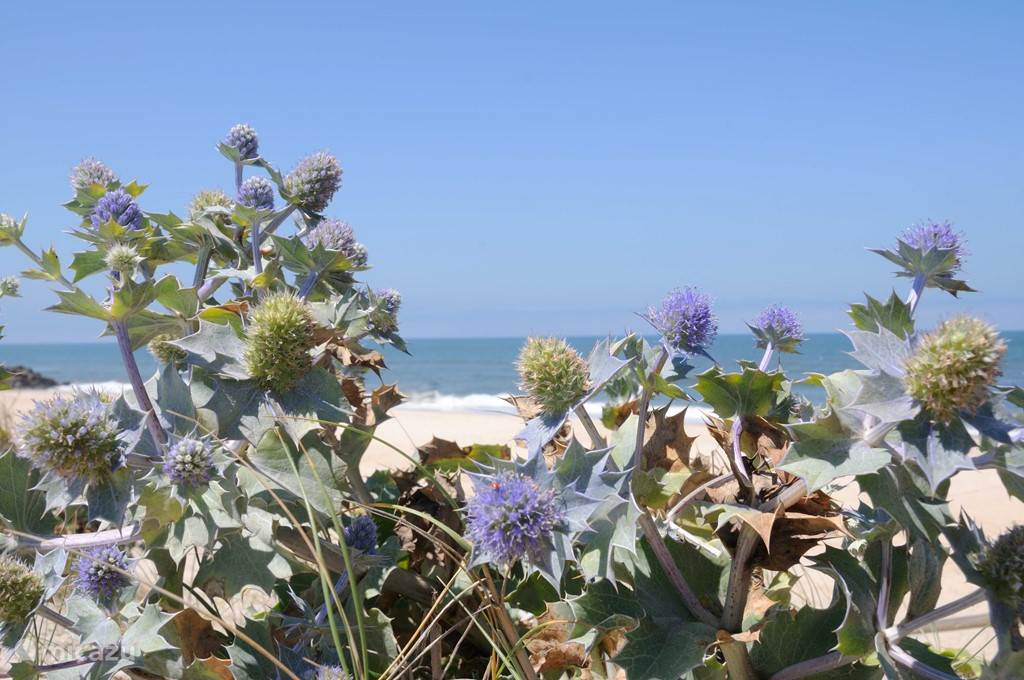 Strand op 10 minuten afstand