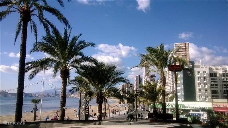 Night Life / Entertainment, Spain, Costa Blanca, Benidorm, apartment Holiday flat on Levante promenade