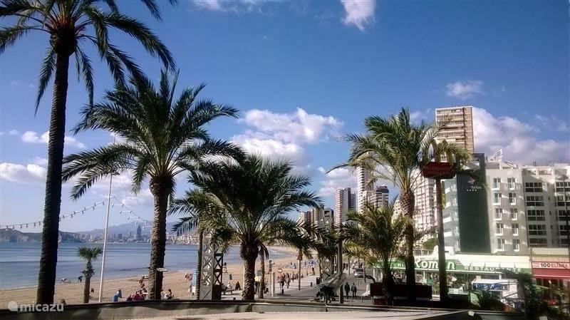 Vakantiehuis Spanje, Costa Blanca, Benidorm - appartement Vakantieflatje op Levanteboulevard