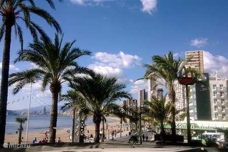 Vakantiehuis Spanje, Costa Blanca, Benidorm appartement Vakantieflatje op Levanteboulevard