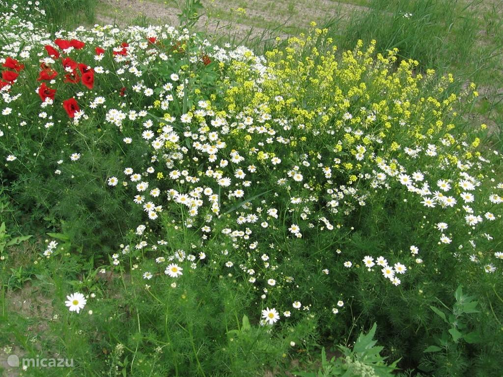 Puur natuur: Wilde bloemenpracht.